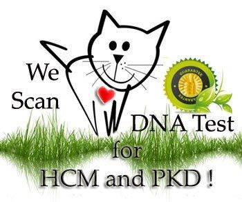 Test Pkd HCM