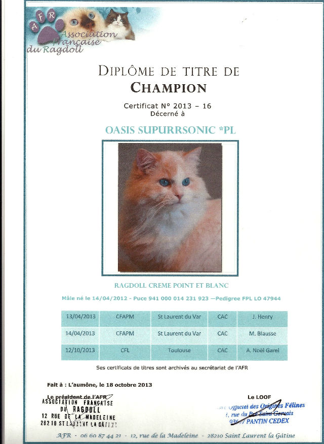 Champion titre ragdoll