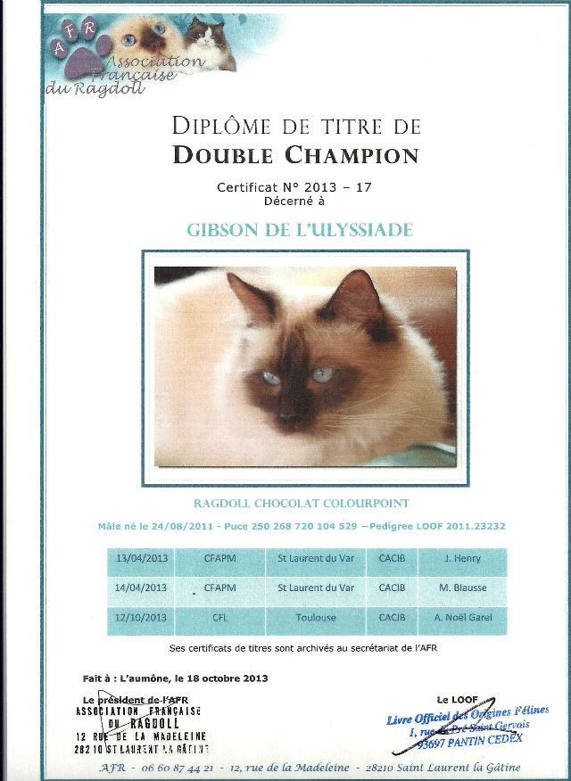Titre double champion ragdoll