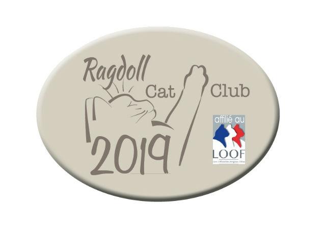 RCC 2019 Club de race ragdoll