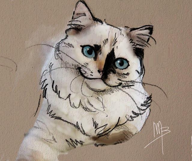 Jyothika dessin ragdoll