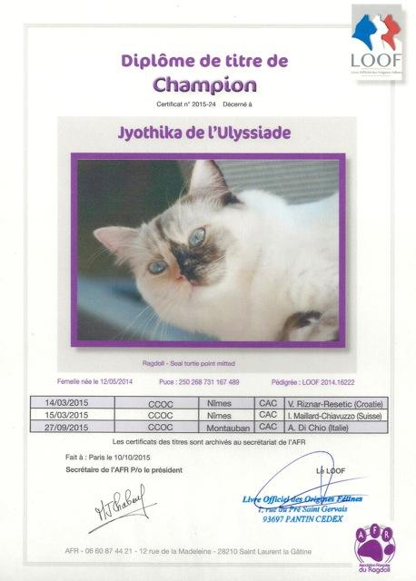 Champion ragdoll Jyothika de l`Ulyssiade seal tortie point mitted