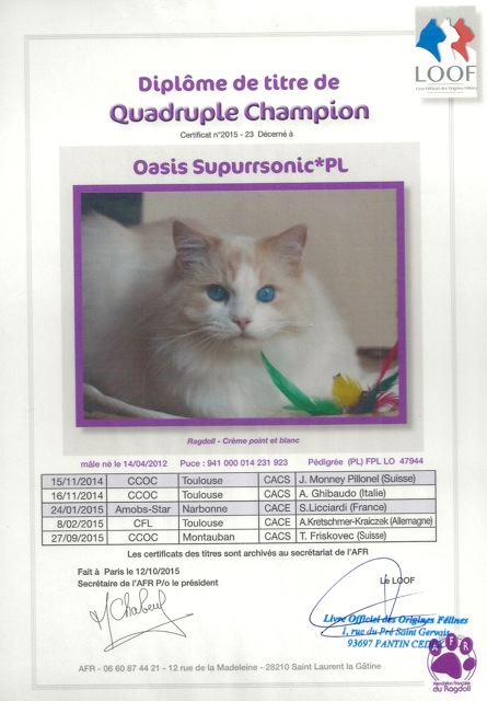 titre quadruple champion Oasis ragdoll champion d`Europe
