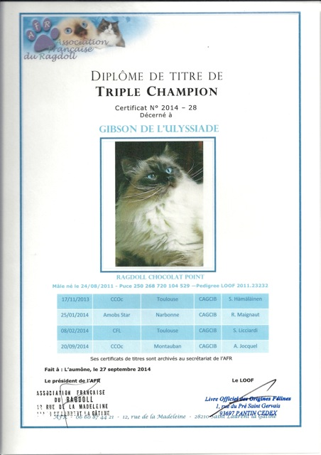titre triple champion ragdoll Gibson de l`Ulyssiade, chocolat point
